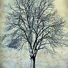 A Tree in Winter-Monterosi, Italy by Deborah Downes