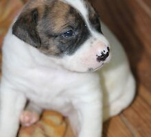 Little Pup by DebbieCHayes