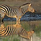 Twins! by Explorations Africa Dan MacKenzie