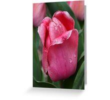 Pink Tulip In Rain Greeting Card