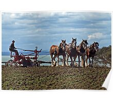 Four Clydesdales by the water Poster