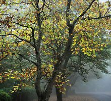 Autumn Mist - Mt Wilson NSW Australia by Bev Woodman