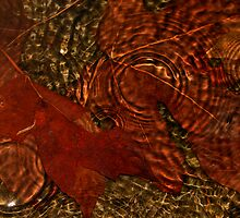Maple Leaves In The Rain by PhotographyTK