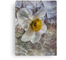 Daffodil in Grunge Canvas Print