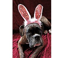 Boxer With *Wabbit* Ears Photographic Print