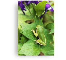 Green Treefrog and Violets Canvas Print