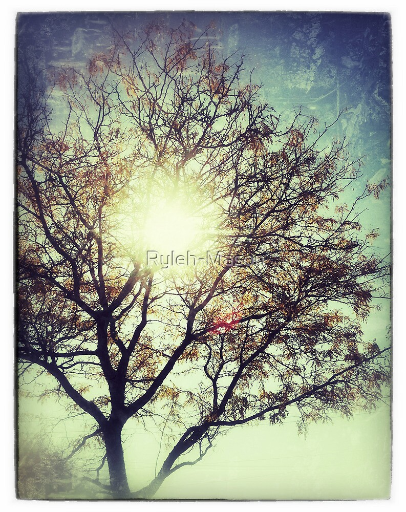 The Sun For The Trees by Ryleh-Mason