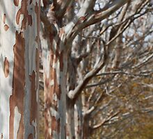 Tin Soldier Trees by Jane McDougall