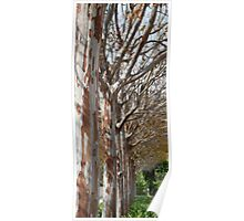 Tin Soldier Trees Poster