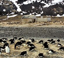 Explorers and Penguins by Carole-Anne