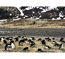 Explorers and Penguins Photographic Print
