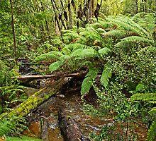 Hot Springs Creek - Hastings Caves Reserve by TonyCrehan