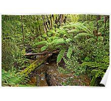 Hot Springs Creek - Hastings Caves Reserve Poster