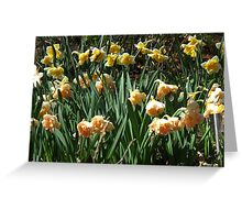 Garden of Daffodils Greeting Card