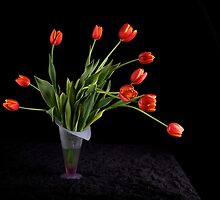 Tulips on Black by RandiScott