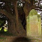 Headstone under a yew tree by thermosoflask