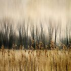 Marsh Edge by KBritt