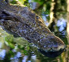 Croc Wanna Eat Me by Paul Todd