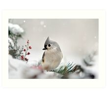 Snow White Tufted Titmouse Bird Art Art Print