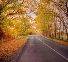 Woodside Autumn, Adelaide Hills, SA by Mark Richards
