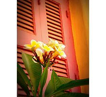 Pink Shutters Photographic Print