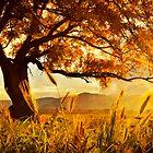 Autumn Glow by Emma  Gilette