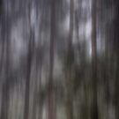 Ghostly Forest by Lois Romer