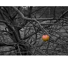 Last Apple Photographic Print
