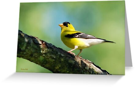 Blue Heart Goldfinch Art by Christina Rollo