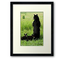 Black Bear Family Framed Print