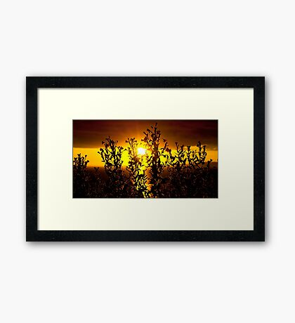 wild atlantic way sunset with flowers Framed Print