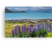 Lupins by the lake Canvas Print