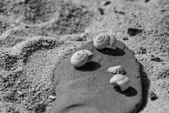 Shells On A Stone by CollinScott