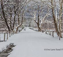 Sparks Lane in the Snow by Kellie Sharpe