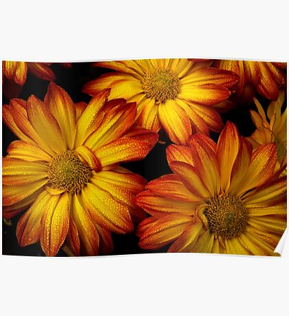 HDR Flowers Poster