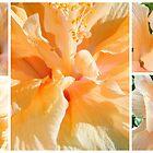 Hibiscus Dreams... by LindaR