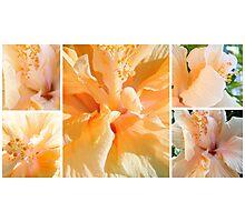 Hibiscus Dreams... Photographic Print
