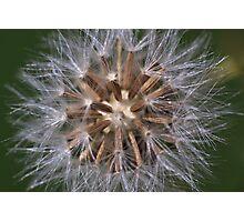 Seeds Photographic Print