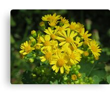 Beautiful Butterweed Bouquet Canvas Print