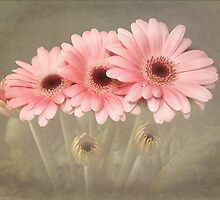 Pink Gerberas by Fe Messenger