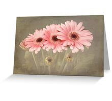 Pink Gerberas Greeting Card