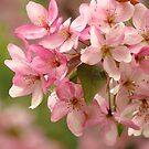 The Gentleness of Spring by lorilee