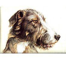 Wolfhound Photographic Print
