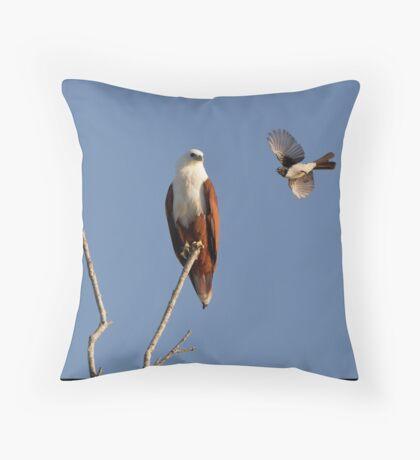 Brahminy Kite & Willy Wagtail Throw Pillow