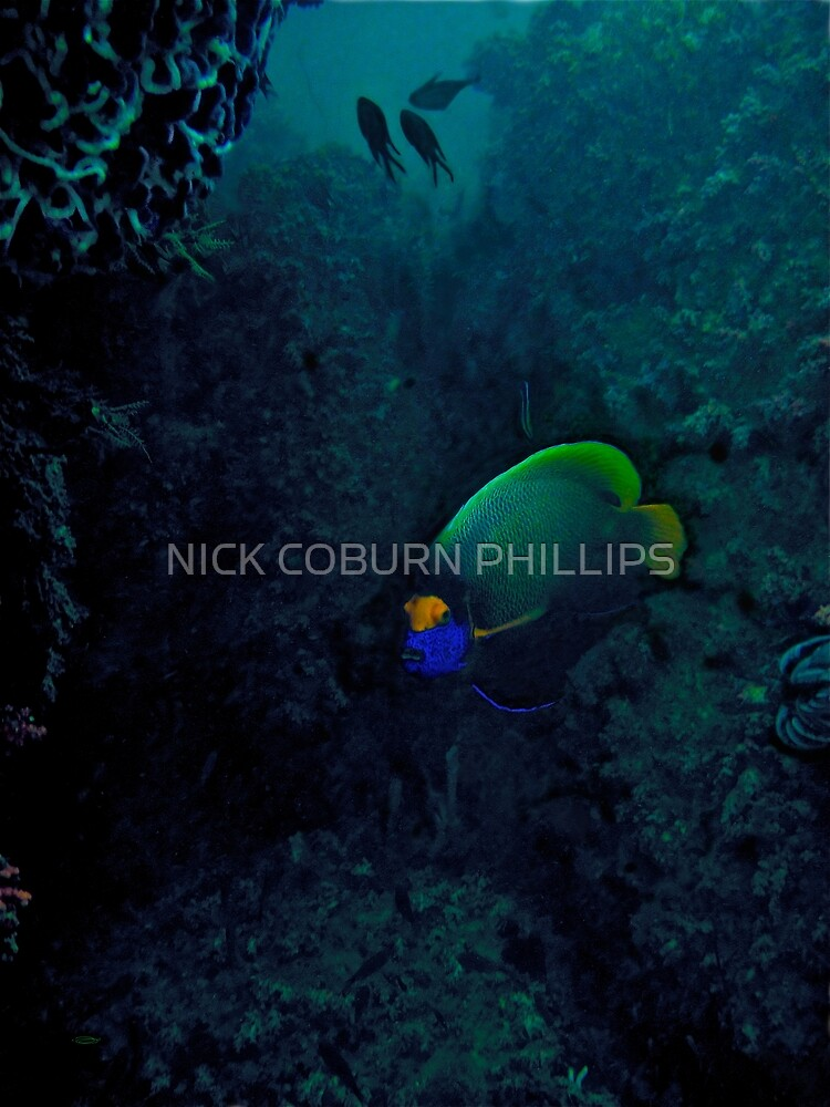 CLEANED UNTIL I'M BLUE IN THE FACE by NICK COBURN PHILLIPS