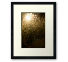 Web of light Framed Print