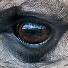 The world through a llama's eye by elainejhillson