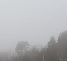 A meditation in fog by Photos - Pauline Wherrell