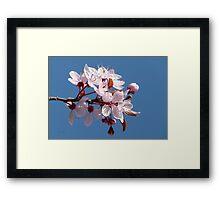 Cherry Blossom Against A Blue Sky Framed Print