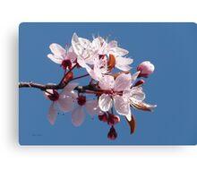Cherry Blossom Against A Blue Sky Canvas Print